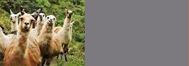 Referral Llama Pic 600 high copy copy.png
