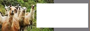Referral Llama Pi (2).png