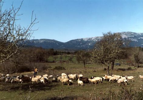 ropa with sheep.jpg