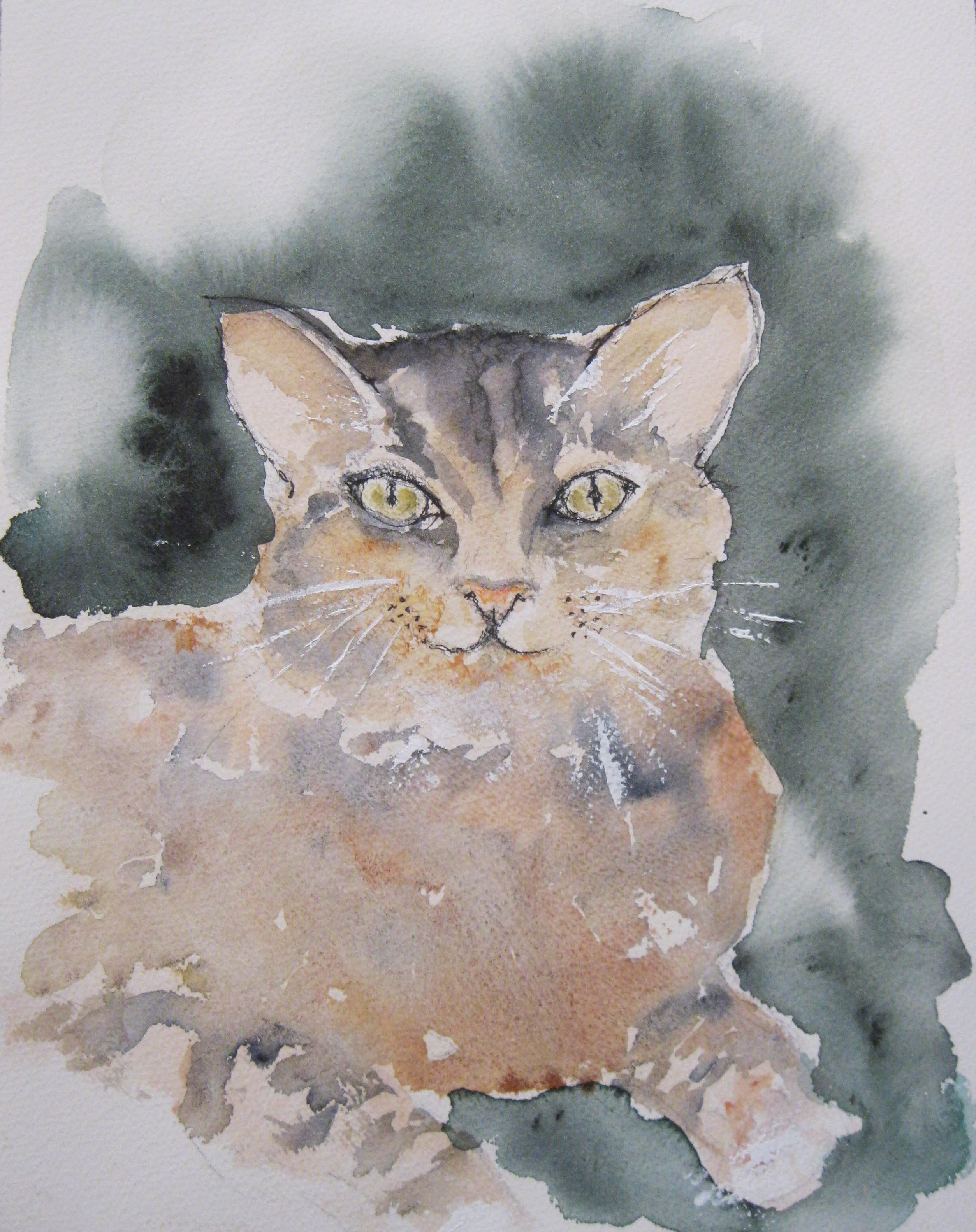 Miss Kit Kat