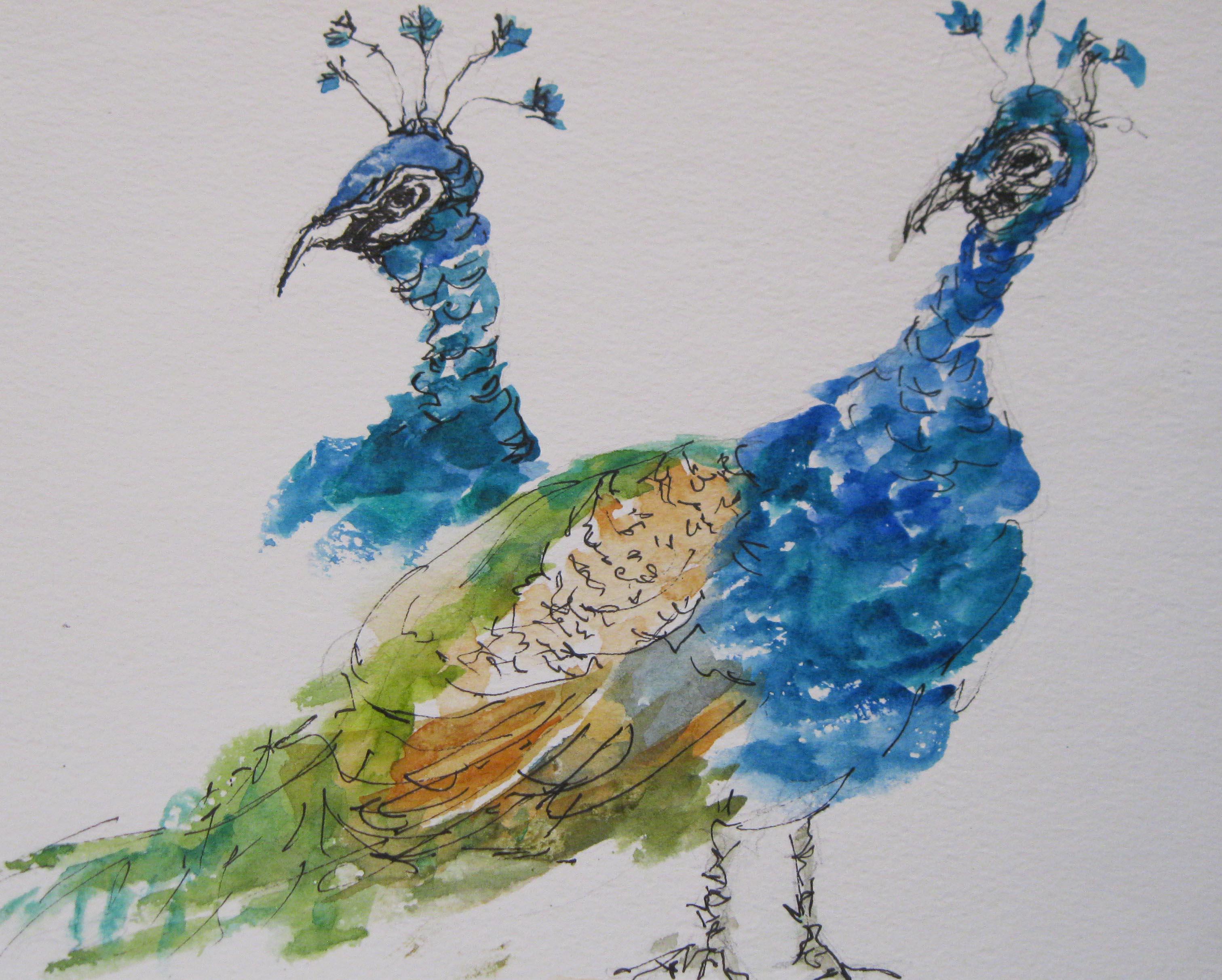 Waimea Peacocks - a study