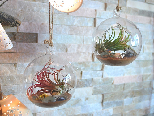 Tillsandia Air Plant bauble