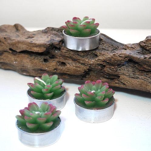Succulent Tealights