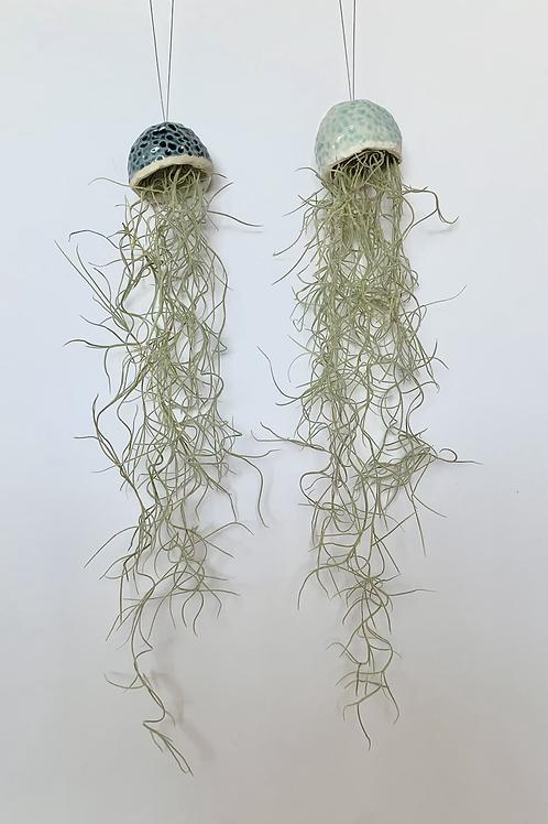 Jellyfish Plant Hangers