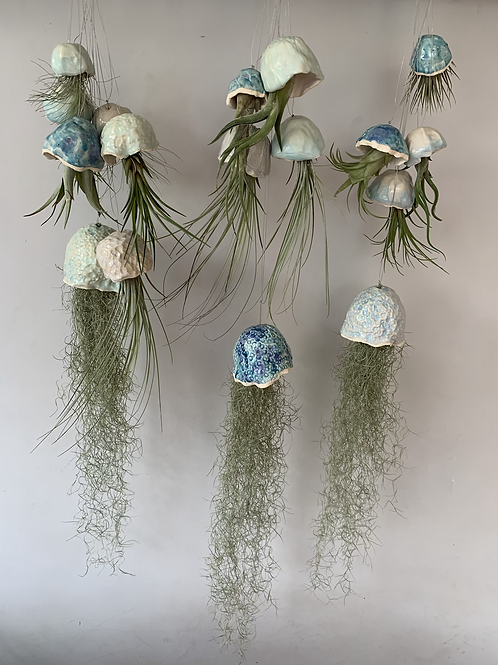 Jellyfish Air Plants