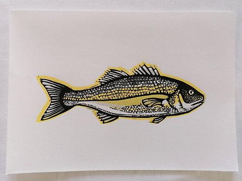 Sea Bass - Mini Print