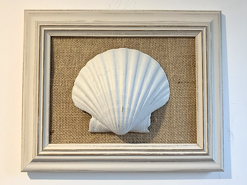 Shell Pictures