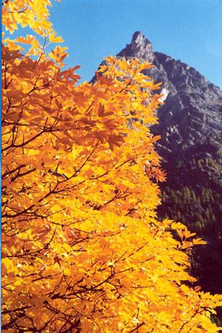 automne-1.jpg