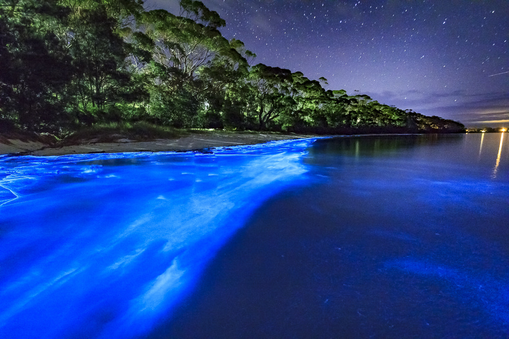 Bioluminescence in Jervis bay