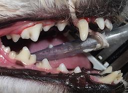 dentalpost.jpg