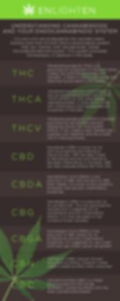Terpenes and Cannabinoid Infographic