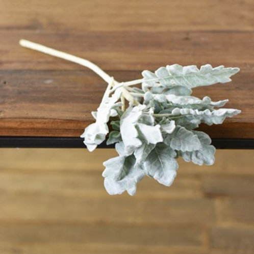 Dusty Miller Pick