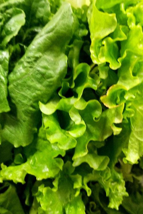 Hydroponic Lettuce Bouquet