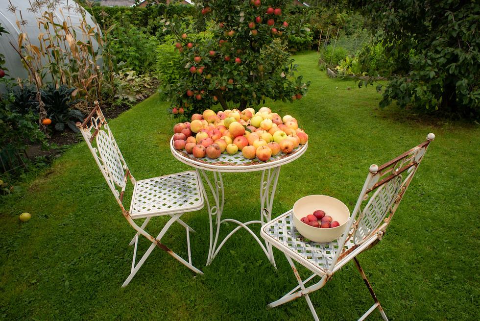 web apple laden.jpg