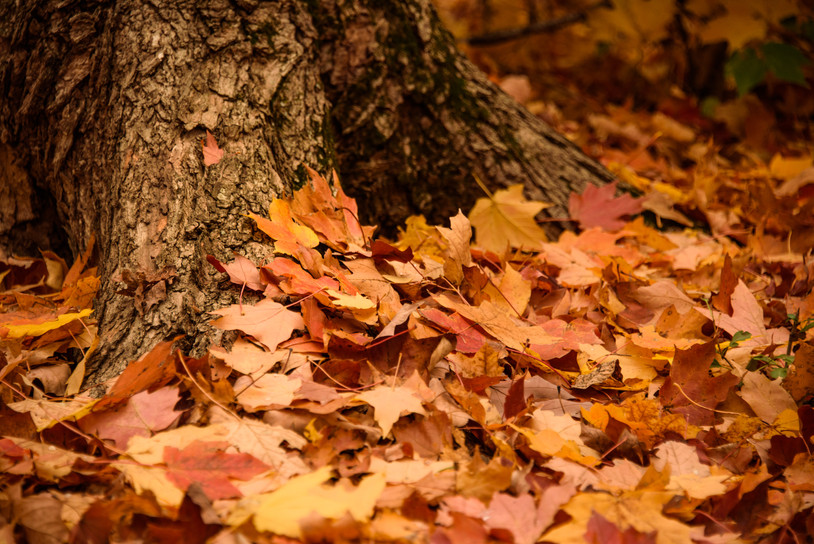 Maple Leaf Blanket