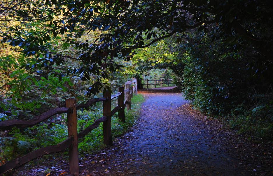 Purple Path Wyatt.jpg