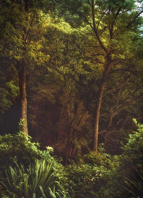Twin Trees.jpeg