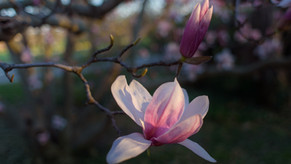 Spring, at last