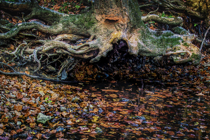 Suspended, Three Creeks State Park, Colu