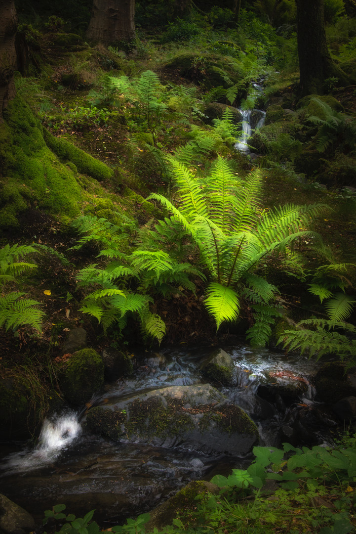 Magical Mother of All Ferns