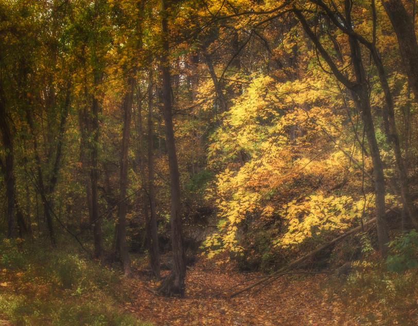 Yellow Creek Tree.jpg
