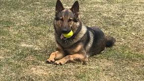 Dog Training & Trainer