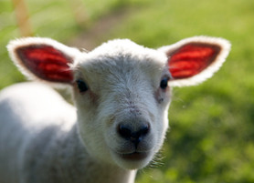 Behold, the Lamb of God.