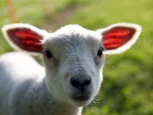 Feed My Lambs (Part 1)