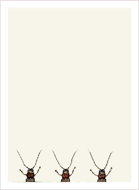 Oberea oculata 1/2