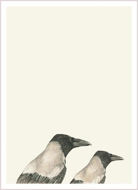Corvus cornix x 2