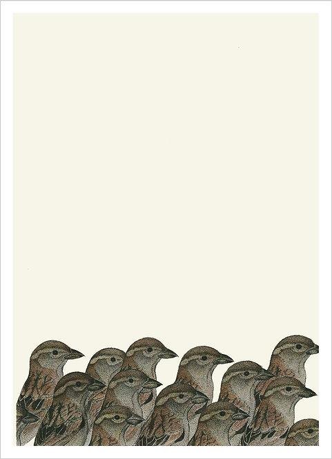 """Passer domesticus """"Flock"""""""