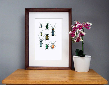 Cerambycidae-contrst.jpg