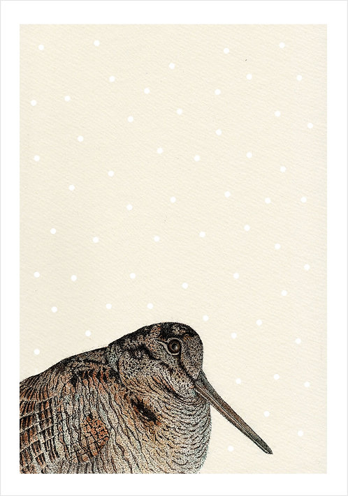Woodcock Snowfall