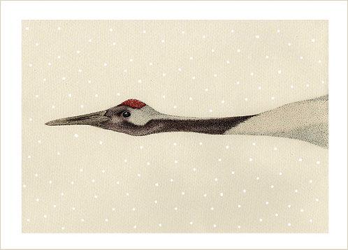 Grus japonensis Snowfall