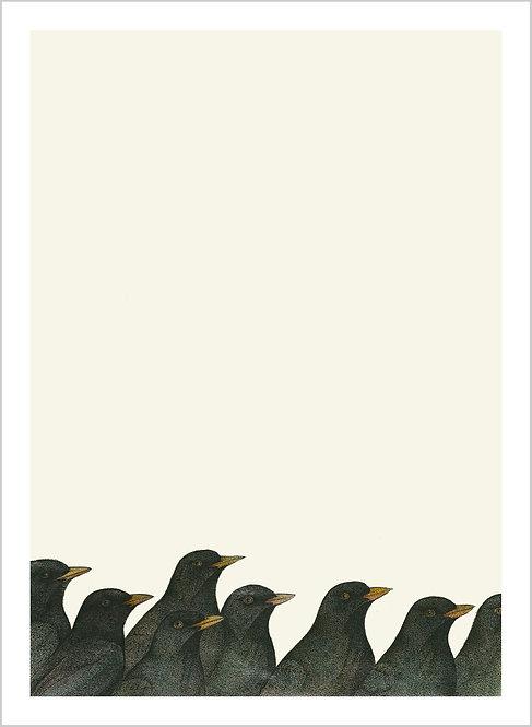 """Turdus merula """"Flock"""""""