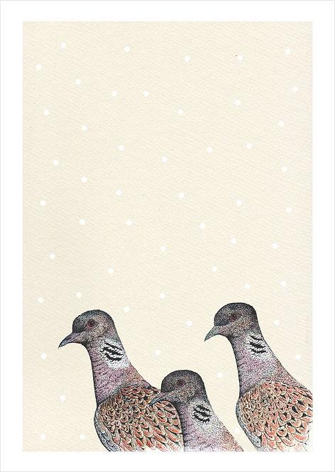 Streptopelia turtur Snowfall
