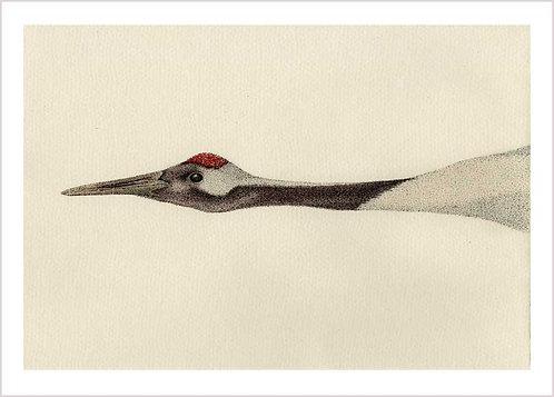 Grus japonensis