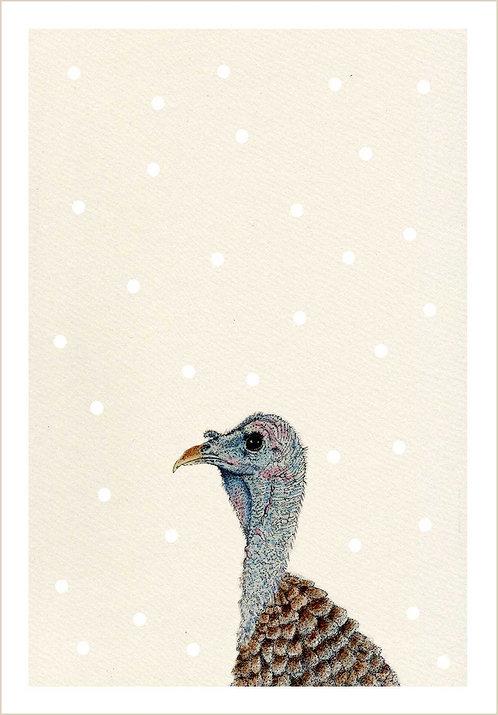 Meleagris gallopavo Snowfall