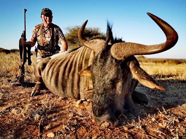 Wildebeest to end the day! Baylysippelsa