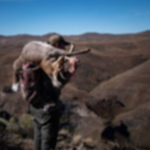 Hunting on top of the world...jpe