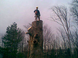 Tree removal, stump grinding, tree cutting, tree climbing