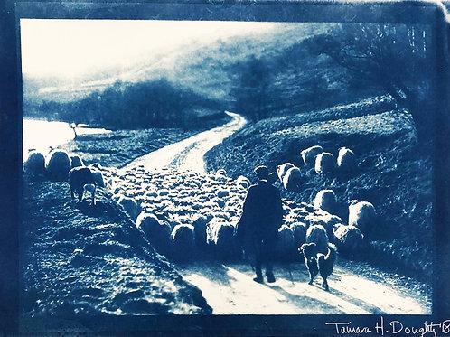 Bob Hardy (Scottish Shepards) - 1942 - Original