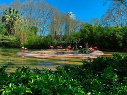 Flamingos at Barcelona Zoo