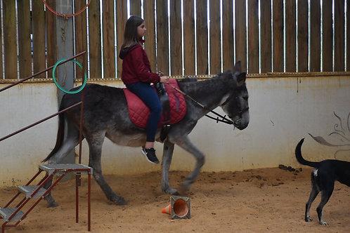 Séance individuelle avec un âne (3h à partir de 6ans)