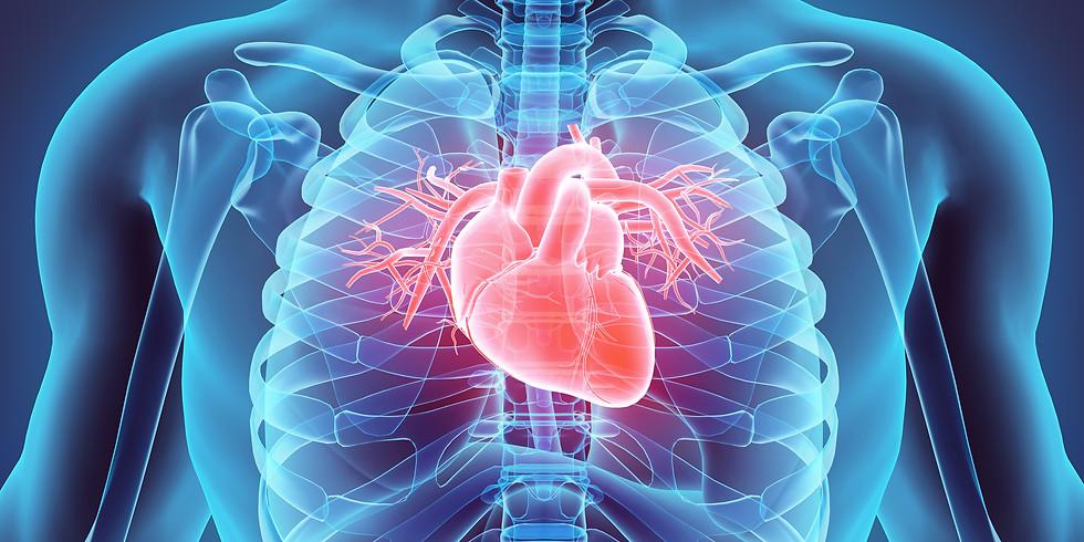 Organs Function | Energy Healing