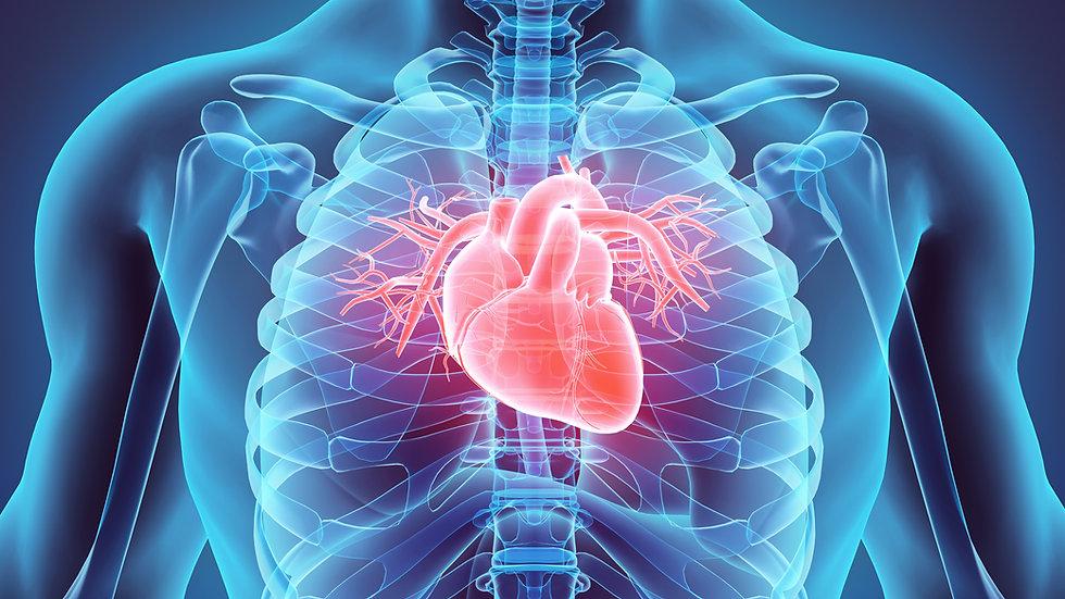Organs Function