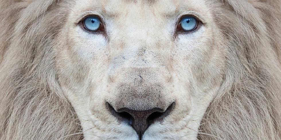 White Lion Healing School Level 1