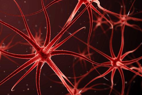 Immune System Booster Meditation