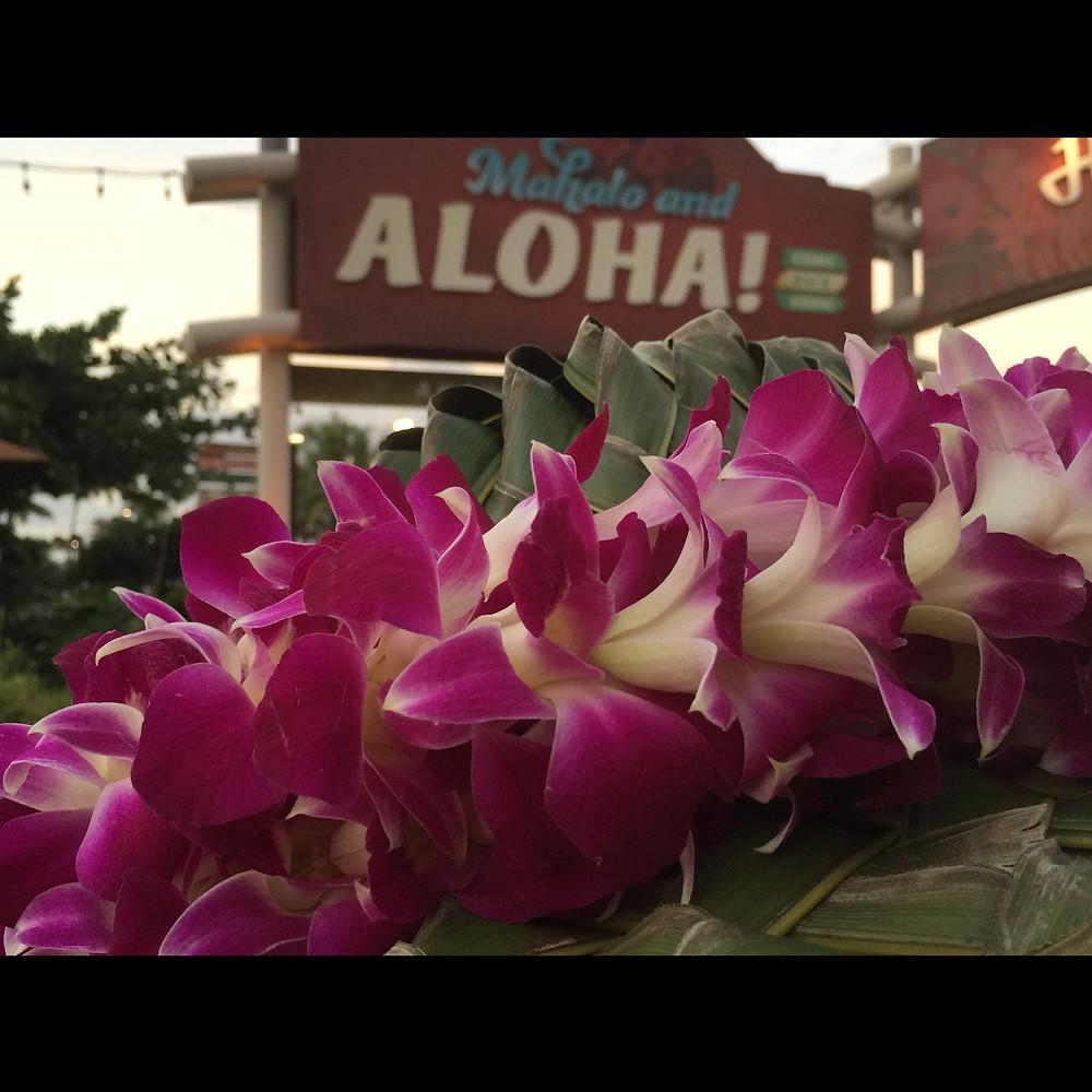 Aloha! 2017年は連休の翌週7月22日(土)&23日(日)の開催です 会場は同じく ' なら100年会館 大ホール' 出演の募集は2017年1月中旬より行います 今までご参加頂いた教室には書類を郵送いたします 新規でご希望の方はHPのフォームより送信ください *新規は第一次募集締切後にご案内いたします