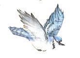 BluebirdRedone.jpg